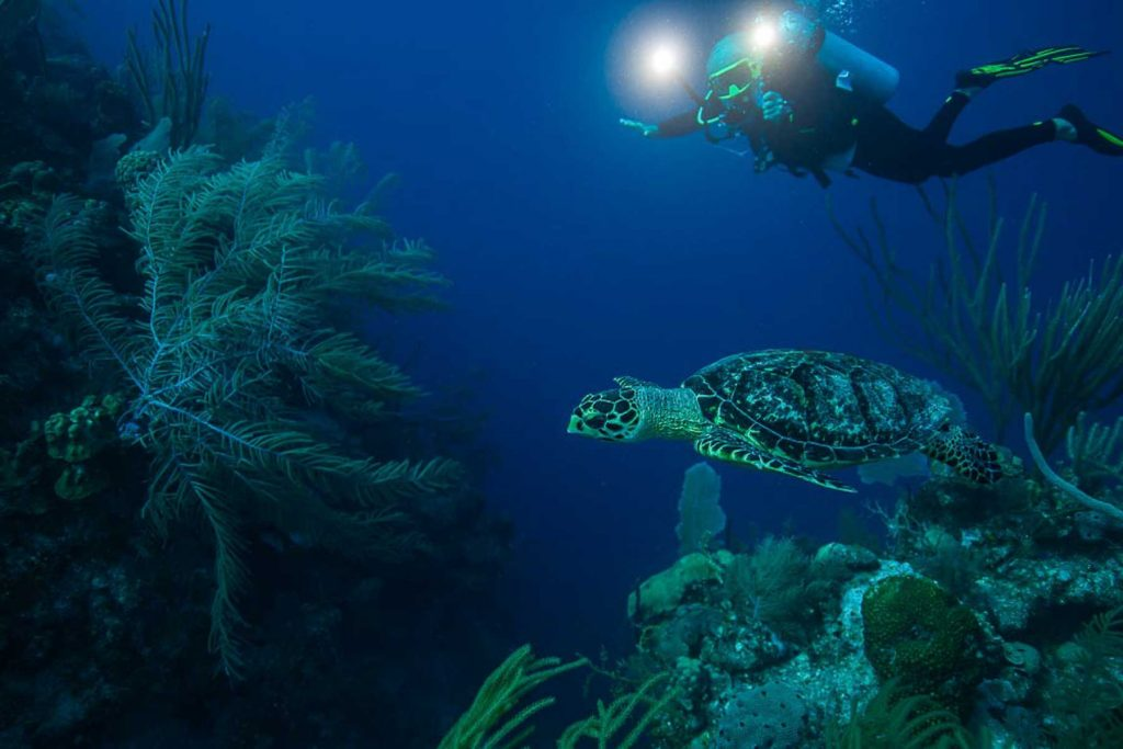 what to do in grand cayman, scuba dive the wall