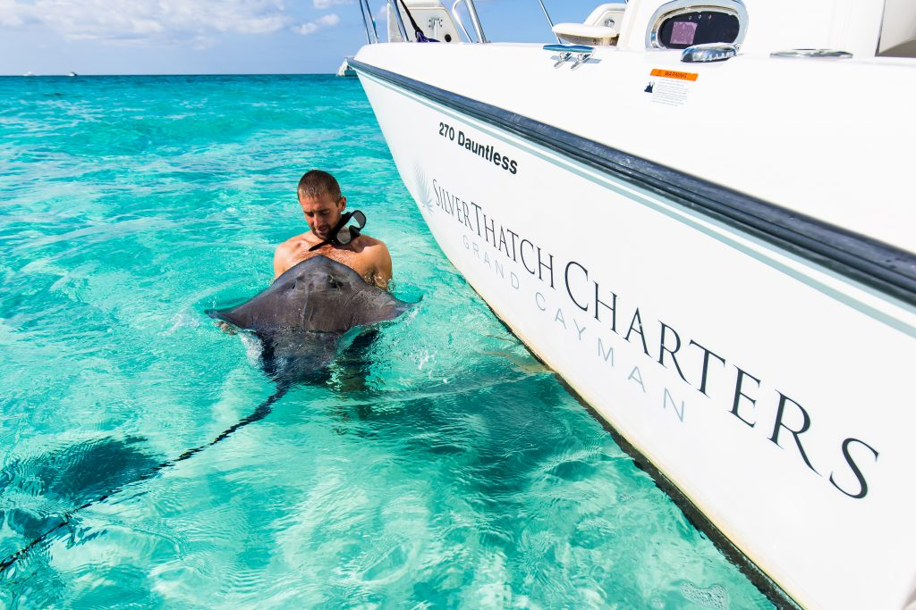 what to do in grand cayman, stingray city