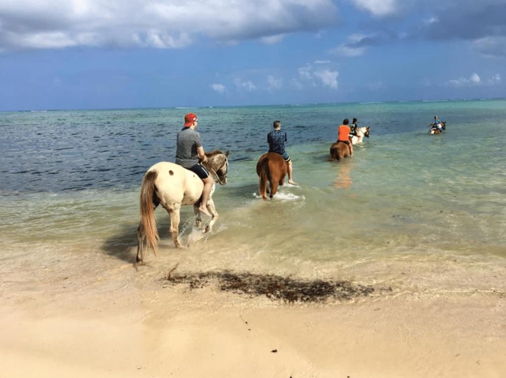 cayman, horseback riding