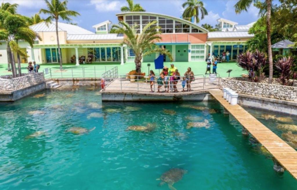 grand cayman, turtle centre