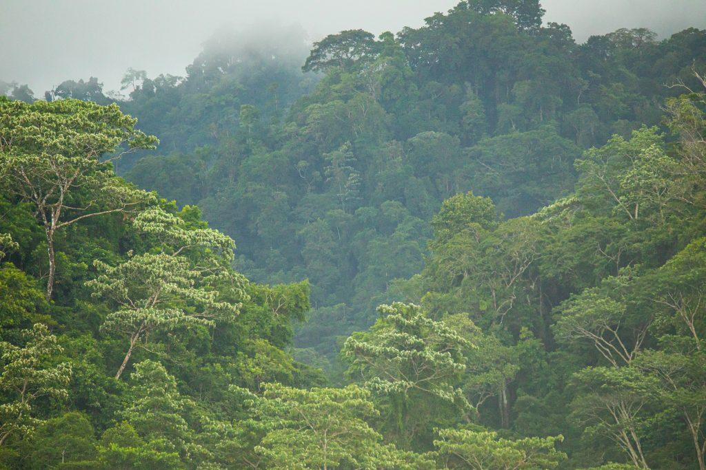 Pierdras Blancas, Osa Peninsula, Costa Rica