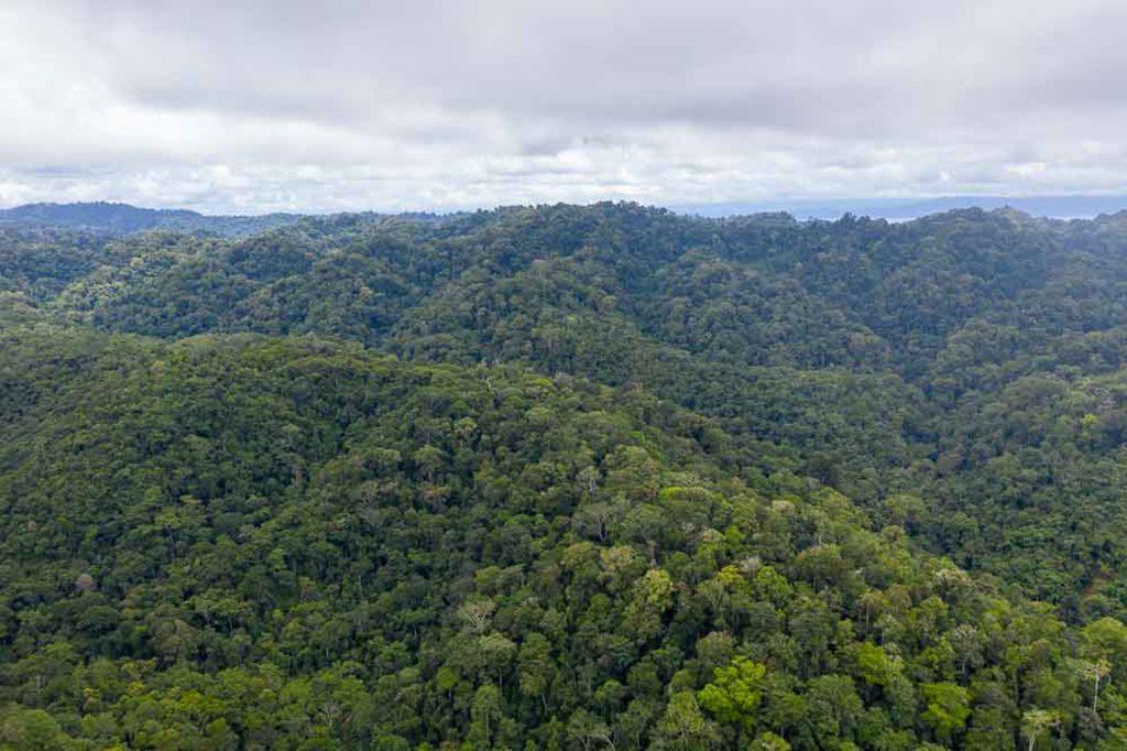 corcovado national park, osa peninsula, costa rica