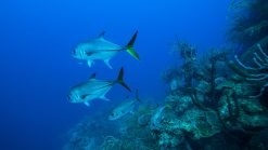 spearfishing vacation best spearfishing destinations